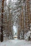 冬天结冰的森林和树 库存照片
