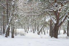 冬天 冷淡的自然 在森林降雪的斯诺伊树 自然冬天场面 背景圣诞节关闭红色时间 1月 免版税库存照片