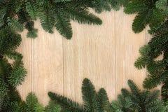 冬天绿叶毗邻 库存照片
