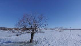 冬天 在一个空的领域的偏僻的树 库存照片