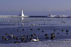 冬天-安大略湖 免版税库存图片