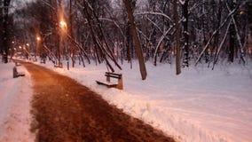 冬天黑暗森林 库存图片