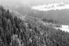 冬天黑森林 图库摄影