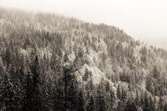冬天黑森林 库存照片