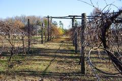 冬天贫瘠葡萄园 库存图片