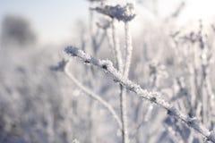 冬天冻结的花 免版税库存图片