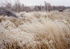 冬天细节 库存图片