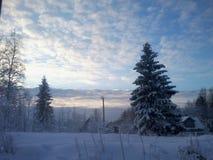 冬天 被忘记的冬天 包括的雪云杉 免版税图库摄影
