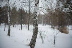 冬天 雪 双翼飞机 免版税库存照片