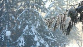 冬天 股票视频