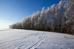 冬天 库存图片