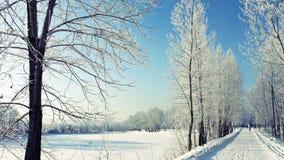 冬天` s公园 免版税图库摄影