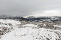 冬天Dovrefjell 库存图片