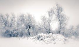 冬天Scape 库存照片