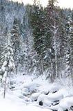 冬天taiga森林流 免版税图库摄影
