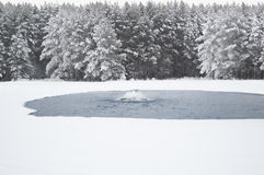 冬天waterscape 免版税库存照片
