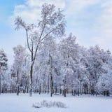 冬日在城市公园 树用雪盖 库存照片