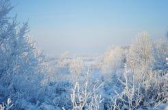 冬日在森林里 免版税库存照片