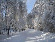 冬日,多雪的森林,在树,蓝色清楚的天空,蓬松白雪,以后的圣诞节,树枝弯曲的冷淡的样式 免版税库存图片