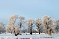 冬日 图库摄影