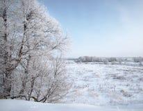 冬日 免版税库存图片