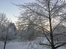 冬时在埃福特,德国 免版税库存照片