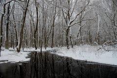 冬时在森林里 免版税库存照片