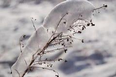冬时在波兰 图库摄影