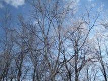 冬时在波兰 库存照片