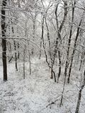 冬时在衣阿华 免版税库存照片