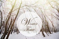 冬时横幅在冬天森林里 免版税库存图片