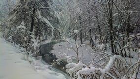 冬时河n森林 库存照片