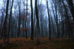 冬时的一个黑暗的森林 库存图片