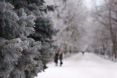 冬时的公园 免版税库存图片