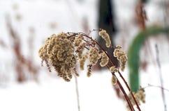 冬时的植物 库存图片