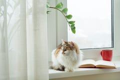 冬时,猫坐看在雪窗口外面的窗台 在窗台开放书和杯子上有热的饮料的 免版税库存图片