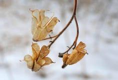 冬景花园的美丽的凋枯的花植物 免版税图库摄影