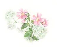 冬葵绘画水彩 库存例证