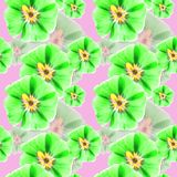 冬葵,锦葵属 花无缝的样式纹理  花卉backg 库存照片