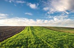 冬麦领域 库存图片