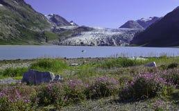 冰、花和山秀丽  免版税库存照片