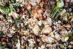 冰冷的叶子和冻结的草背景 免版税图库摄影
