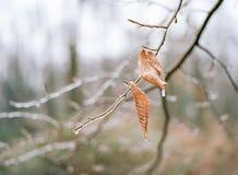 冰冷的叶子在罗克里克公园 图库摄影