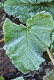 冰冷的叶子 库存照片