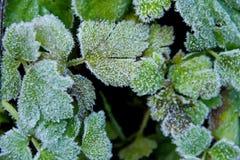 冰冷的叶子 免版税库存图片