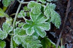 冰冷的叶子 免版税图库摄影