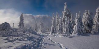 冰冷的天在黑森林 免版税库存照片
