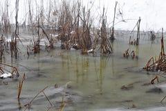 冰冷的山池塘在领域中的冬天 库存图片