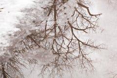 冰冷的树反射 免版税库存图片