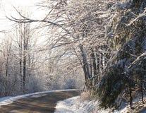 冰冷的树 图库摄影